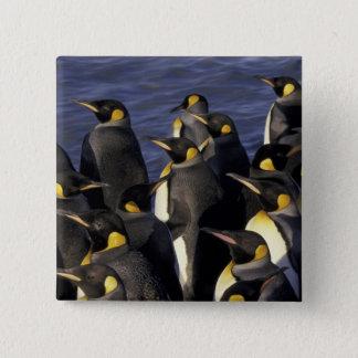 Bóton Quadrado 5.08cm A Antártica, ilha sul de Geórgia. Pinguins de rei