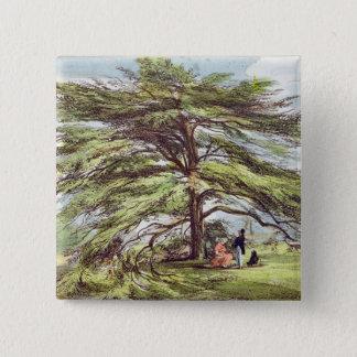 Bóton Quadrado 5.08cm A árvore de cedro de Líbano no arboreto, Kew Garde