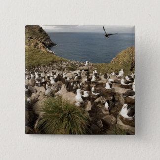 Bóton Quadrado 5.08cm albatroz Preto-sobrancelhudo, Thalassarche