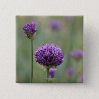 Bóton Quadrado 5.08cm Alliums roxos com fundo difundido natural