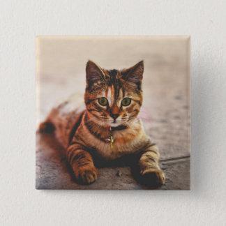 Bóton Quadrado 5.08cm Animal de estimação novo bonito do gatinho do