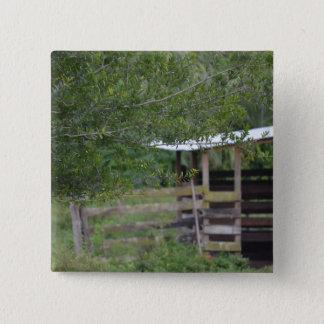 Bóton Quadrado 5.08cm árvore e foto velha de florida do celeiro