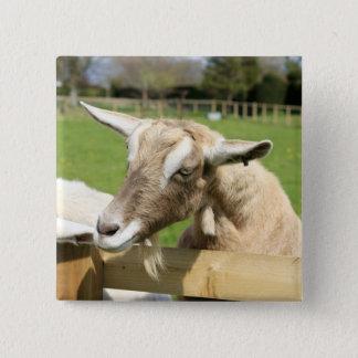 Bóton Quadrado 5.08cm Billy o crachá do botão da cabra