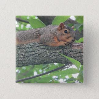 Bóton Quadrado 5.08cm Botão bonito do esquilo