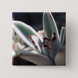 Bóton Quadrado 5.08cm Botão da planta do Succulent