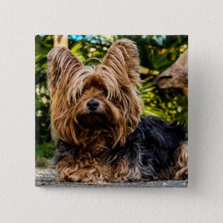 Bóton Quadrado 5.08cm Botão do cão de Yorkie