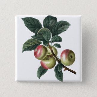 Bóton Quadrado 5.08cm Botão vermelho do ramo da maçã
