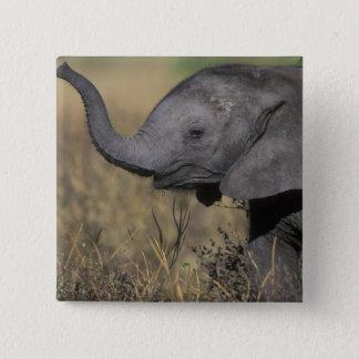 Bóton Quadrado 5.08cm Botswana, parque nacional de Chobe, elefante novo
