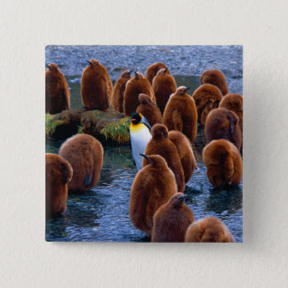 Bóton Quadrado 5.08cm Centro de dia do pinguim - botão
