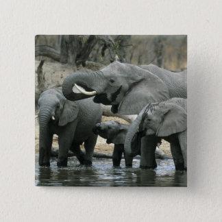 Bóton Quadrado 5.08cm Elefante africano, (africana do Loxodonta),
