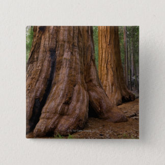 Bóton Quadrado 5.08cm EUA, Califórnia, árvore da sequóia gigante