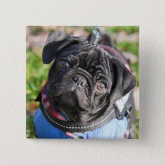 Bóton Quadrado 5.08cm Filhote de cachorro preto do Pug que veste uma