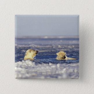 Bóton Quadrado 5.08cm Filhotes de urso polar que jogam no gelo de bloco