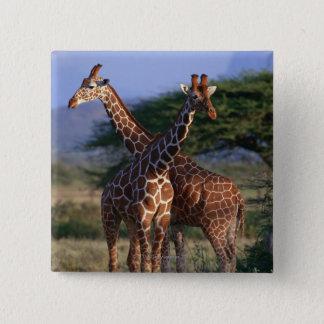 Bóton Quadrado 5.08cm Girafas majestosos