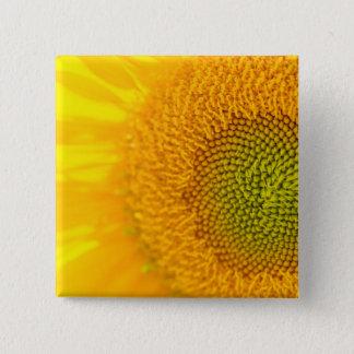 Bóton Quadrado 5.08cm Girassol floral amarelo