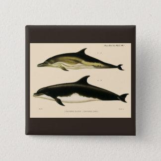 Bóton Quadrado 5.08cm Golfinhos do vintage, animais marinhos e mamíferos