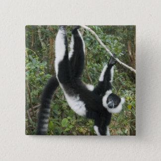 Bóton Quadrado 5.08cm Lemur preto e branco de Ruffed, (Varecia
