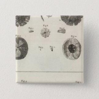Bóton Quadrado 5.08cm Ouriços-do-mar