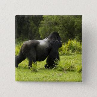 Bóton Quadrado 5.08cm Rwanda, parque nacional dos vulcões. Montanha 2