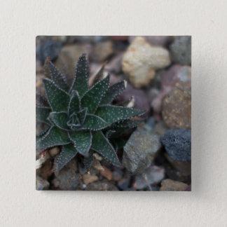 Bóton Quadrado 5.08cm Succulent em rochas