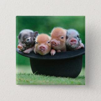 Bóton Quadrado 5.08cm Três porcos pequenos - três porcos - chapéu do