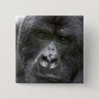 Bóton Quadrado 5.08cm Vulcões NP, Rwanda, gorila de montanha,