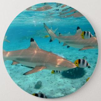 Bóton Redondo 15.24cm Tubarões na lagoa de Bora Bora