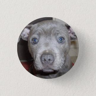 Bóton Redondo 2.54cm Crachá azul do botão do filhote de cachorro de