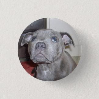 Bóton Redondo 2.54cm Olhos do amor de filhote de cachorro de Staffy,