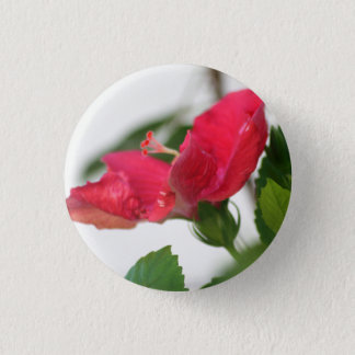 Bóton Redondo 2.54cm Pino do hibiscus