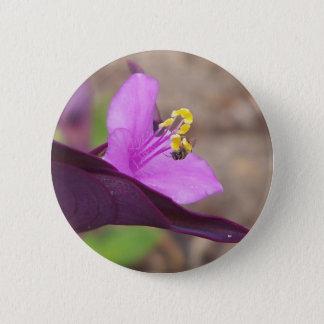 Bóton Redondo 5.08cm a planta roxa chamou o spiderwort e uma abelha