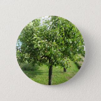 Bóton Redondo 5.08cm Árvore de pera com folhas do verde e frutas