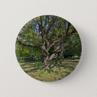 Bóton Redondo 5.08cm Árvore na primavera