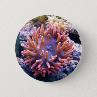 Bóton Redondo 5.08cm Botão #6 das coleções do recife
