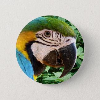 Bóton Redondo 5.08cm Botão azul do papagaio do Macaw