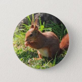 Bóton Redondo 5.08cm Botão bonito vermelho da foto do esquilo, pino