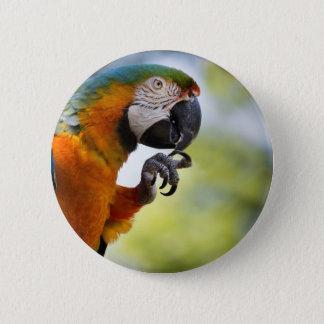 Bóton Redondo 5.08cm botão do macaw