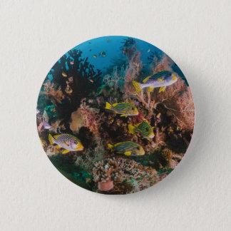 Bóton Redondo 5.08cm Botões do recife de corais