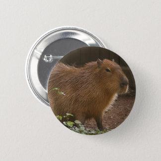 Bóton Redondo 5.08cm Capybara