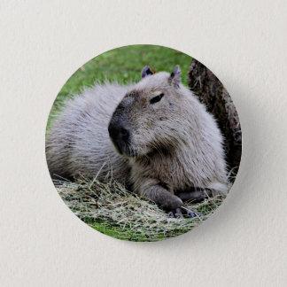 Bóton Redondo 5.08cm capybara,