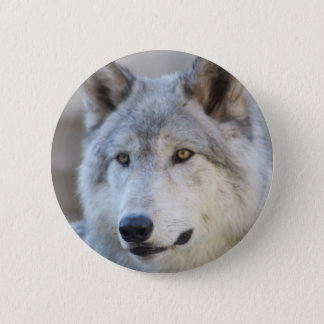 Bóton Redondo 5.08cm Cara do lobo cinzento