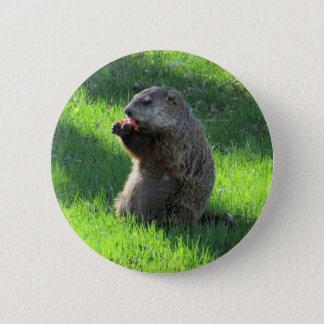 Bóton Redondo 5.08cm Comer de Groundhog