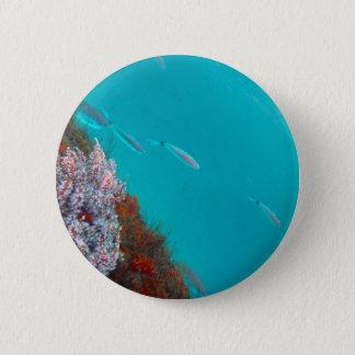 Bóton Redondo 5.08cm Cor subaquática