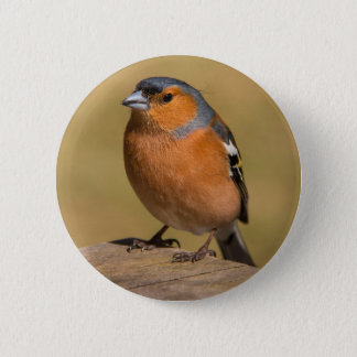 Bóton Redondo 5.08cm Crachá masculino do botão do Chaffinch