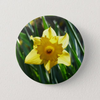 Bóton Redondo 5.08cm Daffodil amarelo 03.0.g