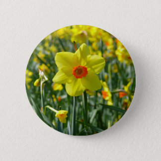 Bóton Redondo 5.08cm Daffodils amarelos alaranjado 01.0.2