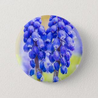 Bóton Redondo 5.08cm Dois jacintos de uva azuis no primavera