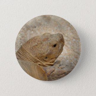 Bóton Redondo 5.08cm fim da cabeça da tartaruga acima da tartaruga