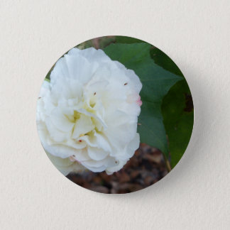 Bóton Redondo 5.08cm flor branca dos mutabilis do hibiscus