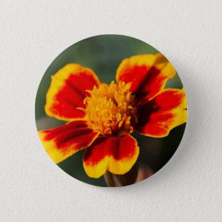 Bóton Redondo 5.08cm flor no jardim